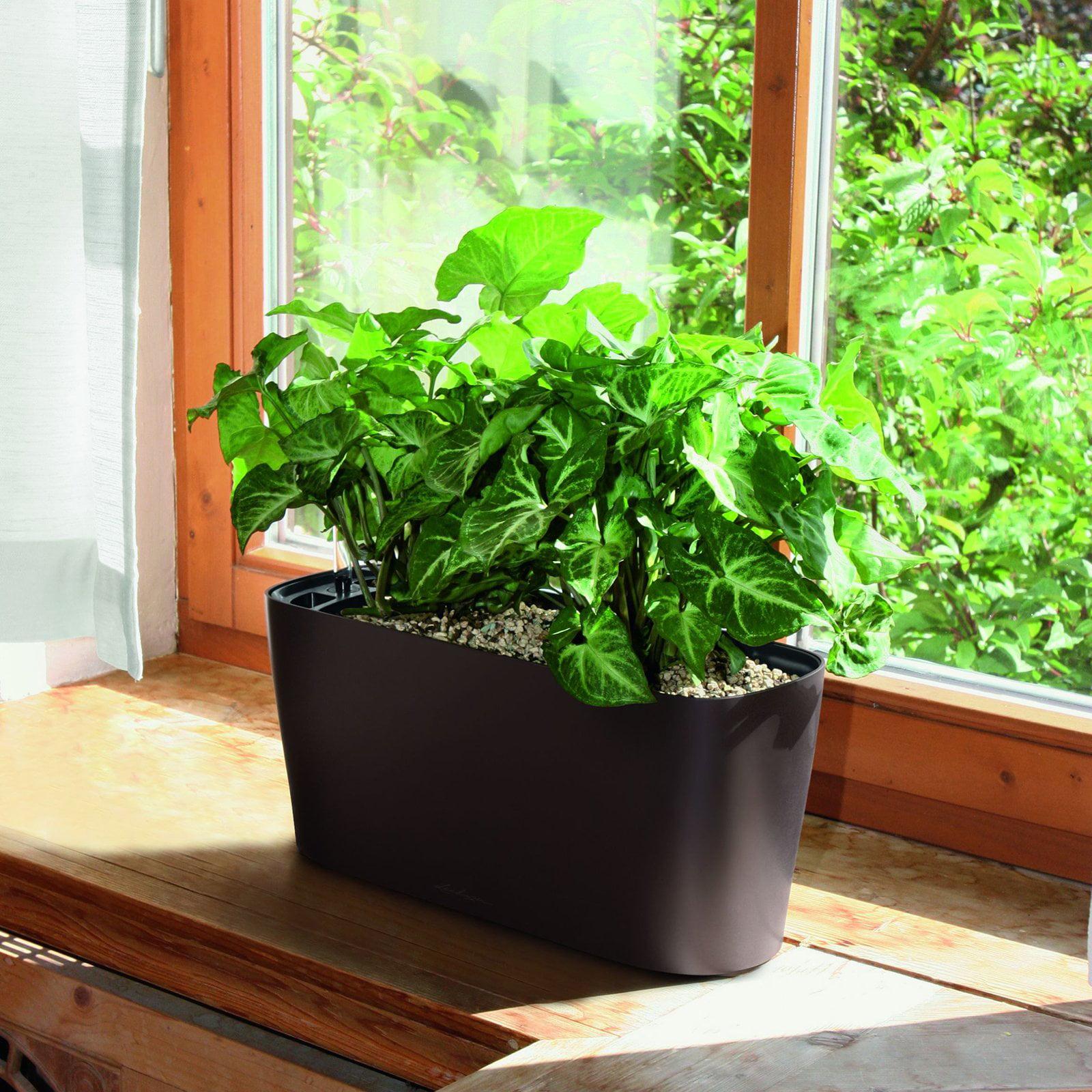 Lechuza Windowsill Self-Watering Indoor Planter - Walmart.com