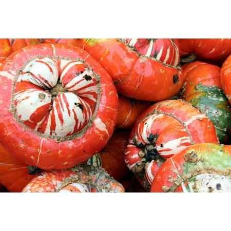 LAMINATED POSTER Fall Pumpkins Udders Autumn Gourds Orange White Poster Print 11 x 17](Gourd Pumpkin)