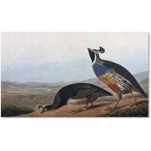 "Trademark Fine Art ""Californian Partridge"" Canvas Art by John James Audubon"