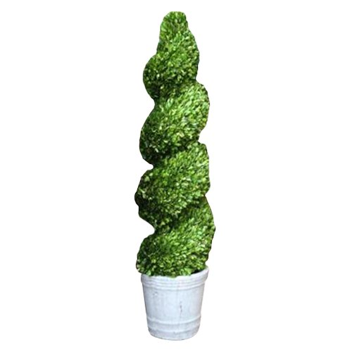 Mills Floral Boxwood Spiral Topiary in Pot