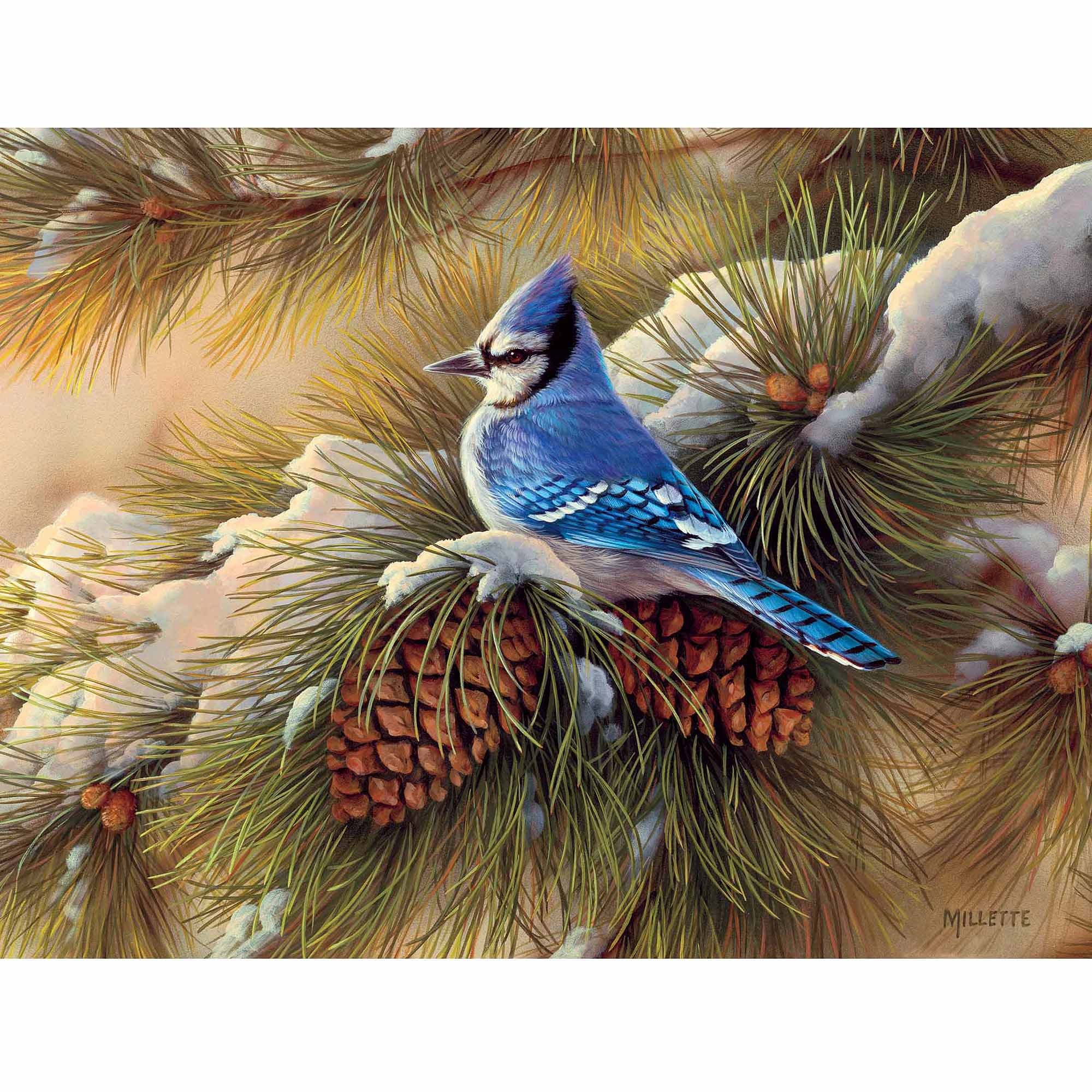 December Blue Jay Boxed Christmas Card