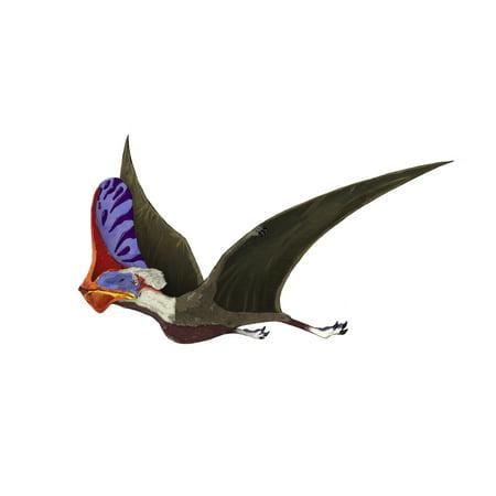 Tapejara A Genus Of Brazilian Pterosaur From The Cretaceous Period Poster Print