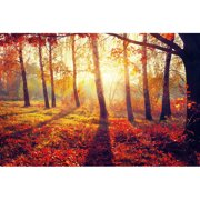 Cortesi Home Golden Afternoon Photographic Print on Plastic/Acrylic in Orange/Red/Yellow