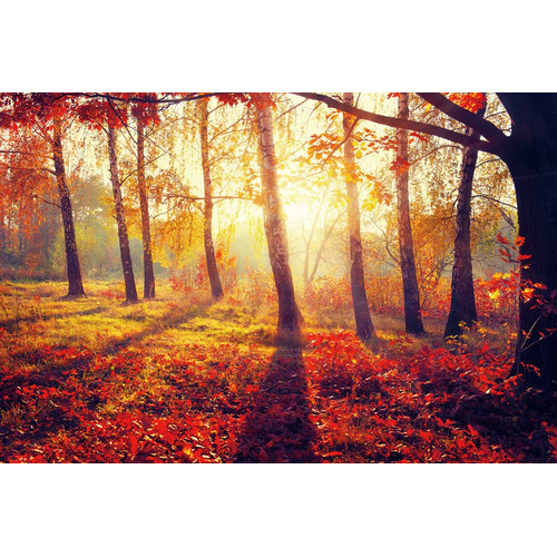 Cortesi Home Golden Afternoon Photographic Print