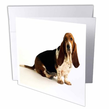 3drose handsome basset hound greeting cards 6 x 6 inches set of 3drose handsome basset hound greeting cards 6 x 6 inches set of 12 bookmarktalkfo Gallery