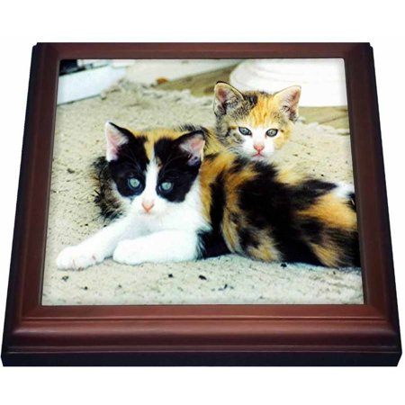 3dRose 2 Adorable Calico Kittens, Trivet with Ceramic Tile, 8 by 8-inch