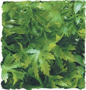 Zoo Med Naturalistic Bush Plant Cannabis, Large Multi-Colored