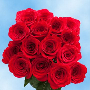 Globalrose 50 Fresh Cut Red Roses For Mothers Day   Classy Roses   Fresh Flowers Express Delivery   The Perfect Mothers Day Gift