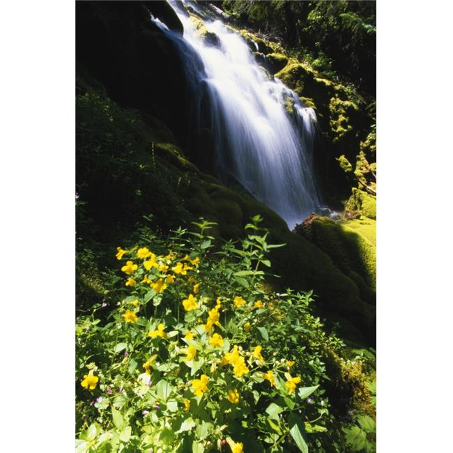 Posterazzi DPI1792529LARGE Proxy Falls Poster Print by Natural Selection Craig Tuttle, 24 x 36 - Large - image 1 of 1