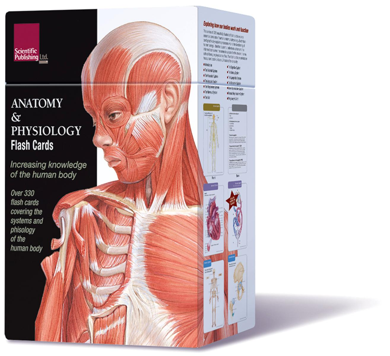 Anatomy Physiology Flash Cards Walmart