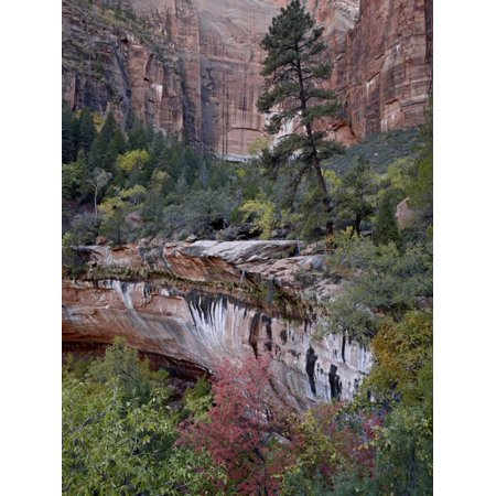 Evergreens, Red Maples, and Red Rock on the Emerald Pools Trail, Zion National Park, Utah, USA Print Wall Art By James