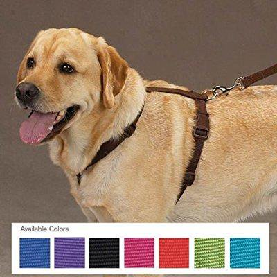 zack & zoey 1-inch nylon dog harness with nickel-plated d-ring and plastic buckles, chocolate