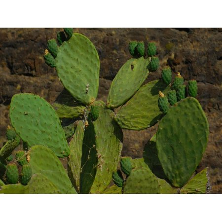 - LAMINATED POSTER Colors Green Gran Canaria Canary Cactus Poster Print 24 x 36