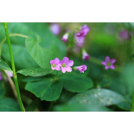 Laminated Poster Green Wild Flowers Purple Fresh Grass Less Poster Print 11 x -