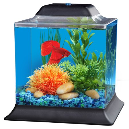 Hawkeye 1 5 gallon betta fish tank aquarium kit for Betta fish tanks walmart