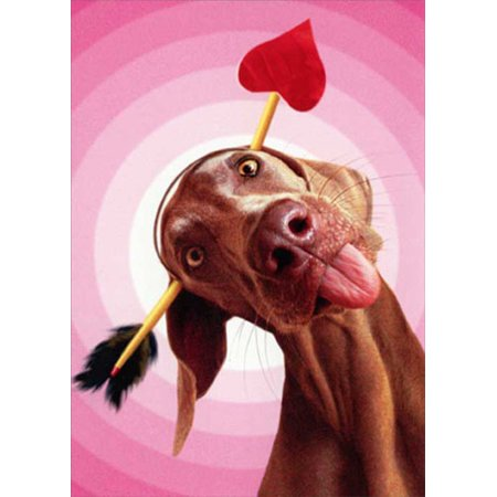 Avanti Press Dog With Arrow Through Head Funny / Humorous Valentine's Day Card