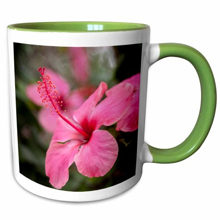 3dRose Hibiscus flower, Cozumel, Mexico - SA13 JEN0001 - Jim Engelbrecht - Two Tone Green Mug, 11-ounce ()