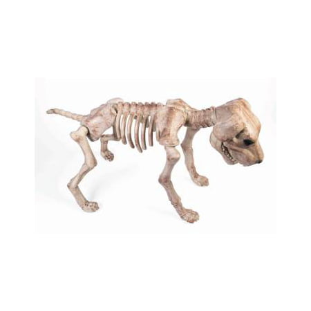 Bone Skeleton Dog Halloween Decoration](Halloween Bones Sayings)