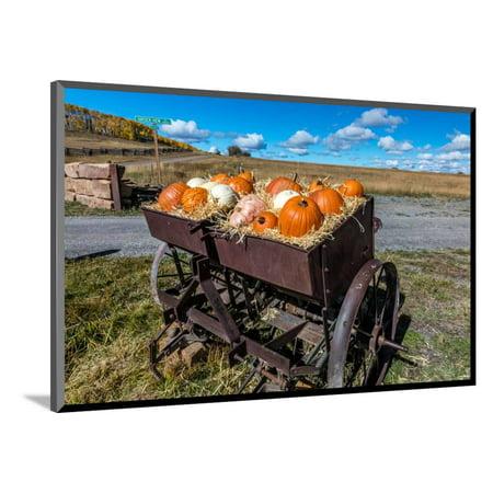 Halloween City Colorado (Display of Halloween Pumpkins, Hastings Mesa, Colorado - near Ridgway Wood Mounted Print Wall)