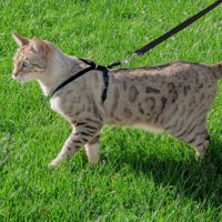 Premier Pet Cat Harness & Leash for Medium Cats - Best for Cats 5 - 12 Lb. - Safely Enjoy the Outdoors with Your Cat - Adjustable for a Safe, Custom Fit