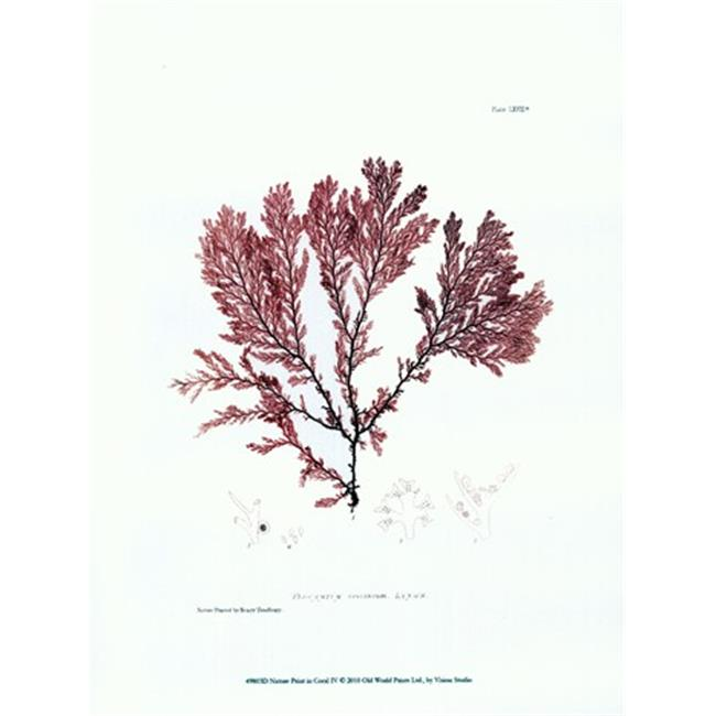 Old World Prints OWP49803D Nature Print in Coral IV Poster Print by Vision studio -9.5 x 13 - image 1 of 1