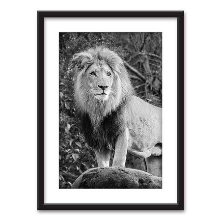 wall26 framed wall art male lion in black white. Black Bedroom Furniture Sets. Home Design Ideas