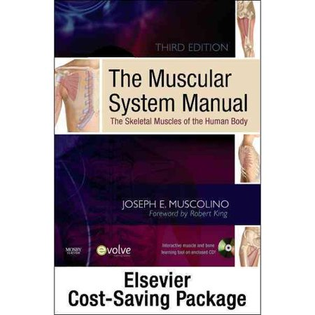The Muscular System Manualmusculoskeletal Anatomy Flashcards
