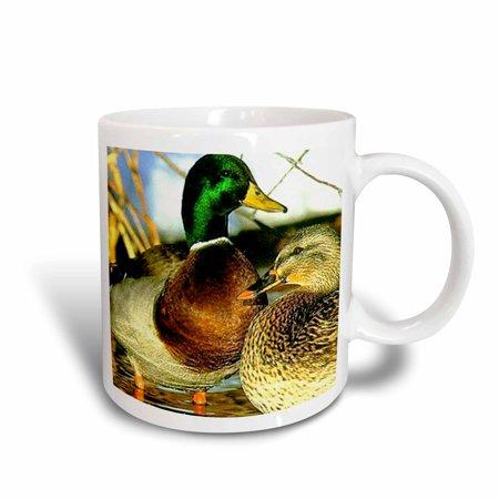 3dRose Mallard Duck, Ceramic Mug, 11-ounce](Ceramic Duck)