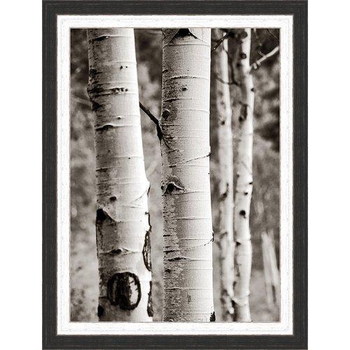 Ashton Wall D cor LLC 'Aspens I' Framed Photographic Print