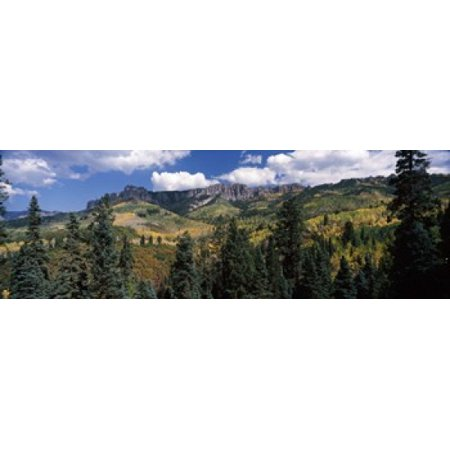 Trees on mountains Ridgway Colorado USA Canvas Art - Panoramic Images (36 x 12)