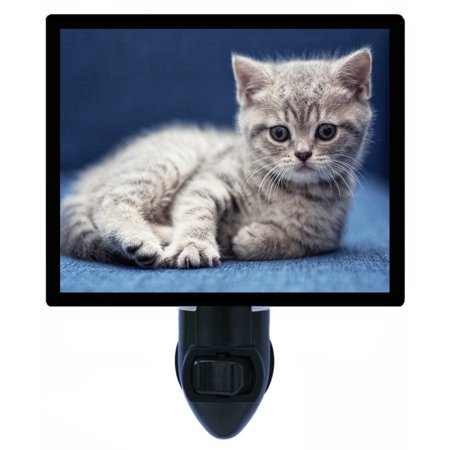 Night Light - Photo Light - Feeling Blue - Grey Kitten - Cat