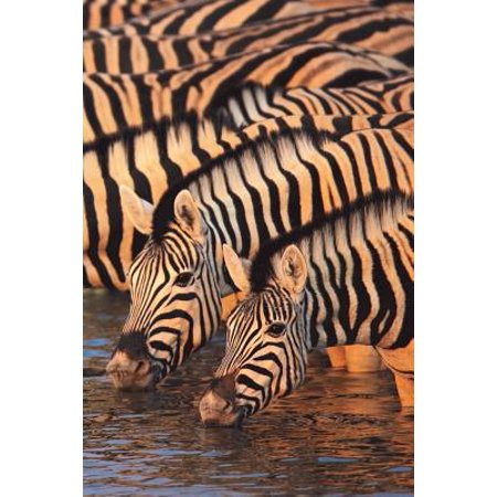 Zebra Journal - Zebra Zeal Blank Book Lined Journal (4x6)