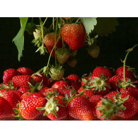 Canvas Print Fruits On The Tree Bush Fruit Fruits Strawberries Stretched Canvas 10 x - Strawberry Brush