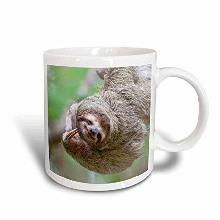 3dRose Brown-Throated Sloth wildlife, Corcovado Costa Rica - SA22 JGS0017 - Jim Goldstein, Ceramic Mug, 11-ounce