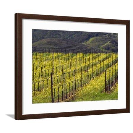 Oakville Napa Valley - Springtime Mustard Flowers, Napa Valley, Oakville, California Framed Print Wall Art By Janis Miglavs