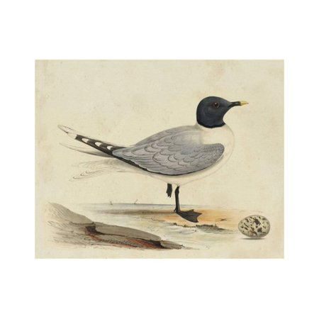 Meyer Shorebirds I Print Wall Art By H. l. Meyer