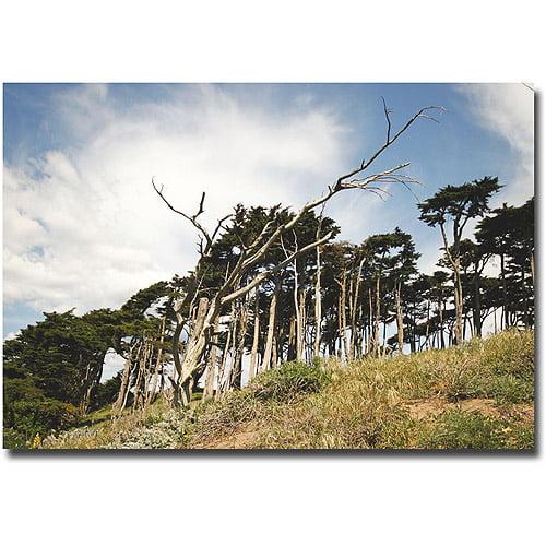 "Trademark Fine Art ""Petrified Trees"" Canvas Wall Art by Ariane Moshayedi"