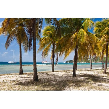 Palm trees on beach, Britannia Bay, Mustique, Saint Vincent And The Grenadines Print Wall Art