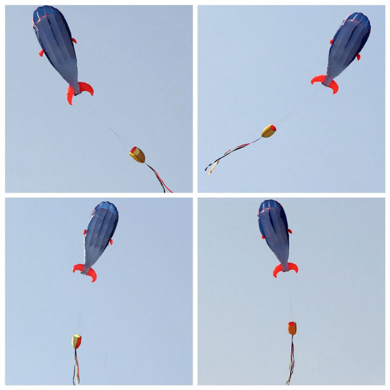 Click here to buy Huge Soft Parafoil Kite Cute Blue Dolphin Beach Kites Sport Kite Outdoor Toy.