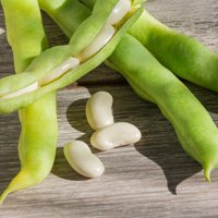 Henderson Lima Bean Seeds - 1 Lb - Non-GMO, Heirloom - Vegetable Garden Seeds - Also Called: Butter, Chad, Pallar Beans