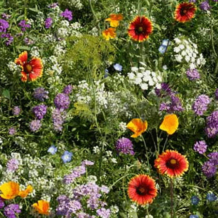 Low Growing Wildflower Seed Mix - 4 Oz - Mix of Annual & Perennial Wild Flower Garden -