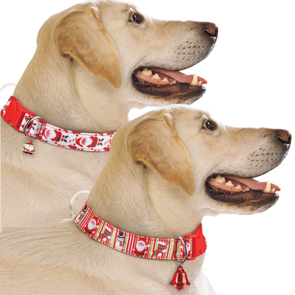 Festive Christmas Dog Collars with Red Bell Set of 2, Dog Accessories for Holiday Season, Small Medium by Winston Brands