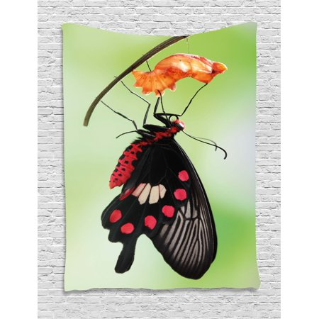 Butterfly Tapestry Wall Hanging - Swallowtail Butterfly Tapestry, Amazing Moment Coming Out of Cocoon Chrysalis Transformation, Wall Hanging for Bedroom Living Room Dorm Decor, Red Black Green, by Ambesonne