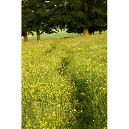 Posterazzi DPI1830034LARGE Ireland - Trail Through Buttercup Meadow Poster Print by Peter McCabe, 22 x 34 - Large - image 1 of 1