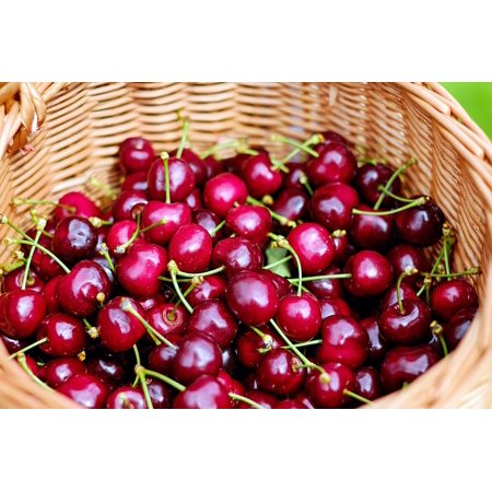 Peel N Stick Poster Of Sweet Cherries Red Healthy Fruit Basket 24x16 Adhesive Sticker Print