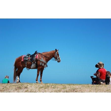 LAMINATED POSTER Horseback Riding Horses Saddle Horse Blue Sky Poster Print 24 x 36