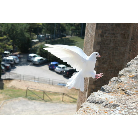LAMINATED POSTER Dove Of Peace White Pigeon Bird Dove Peace Symbol Poster Print 24 x 36