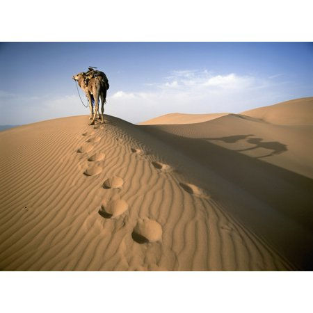 Blue Man Tribe Of Saharan Traders With Camel At Dawn In Dunes Canvas Art - Ian Cumming  Design Pics (18 x - Blue Ocean Traders