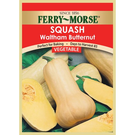 Image of Vegetable seed Squash-Waltham Butternut