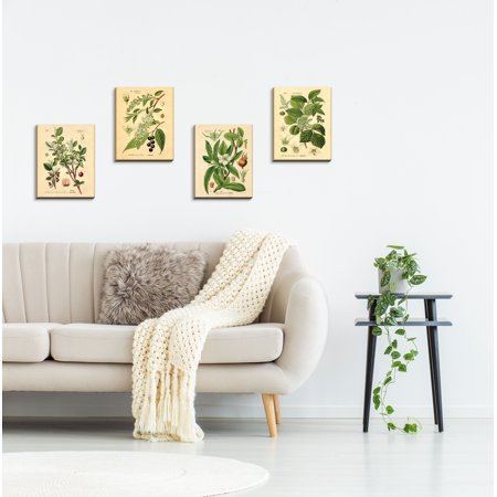 Poster Set Plant (Gango Home Decor Vintage Plant Botanical Wall Art; Four Green 8x10in Hand-Stretched Canvases)
